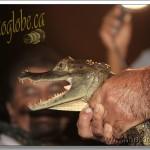 Rencontres Nocturnes – Amazonie