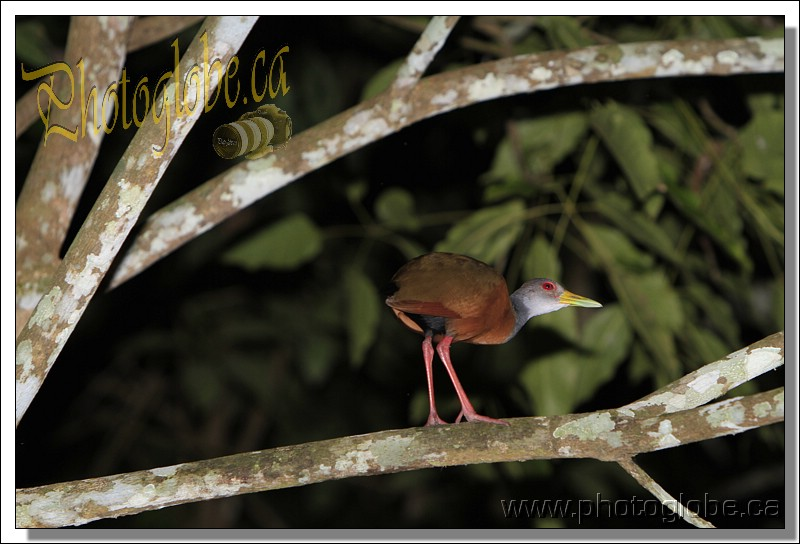 first day on the cruise, night trip ˆ On the Amazon river, Manaus, Amazonie, Brasil le 01 April 2013. Photo: Pascal Gazon
