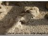 Pompei - Corps Pétrifié