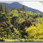"""Le Café des """"Blue Mountains"""" – Jamaïque"""